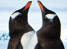 Antarctica: Boots, Pants, Poles