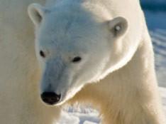 Arctic: Boots, Pants, Poles
