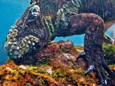 Galapagos: Splash Wear